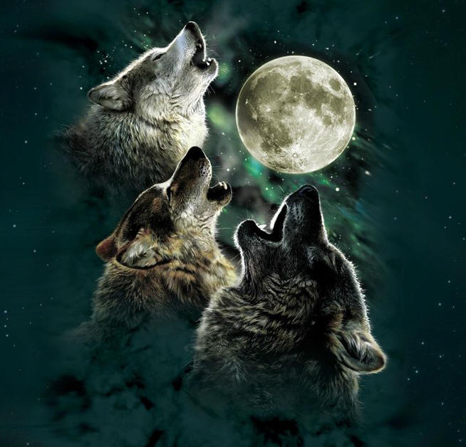 Three Wolf Moon T-shirt design - Wolves Howling at the Full Moon